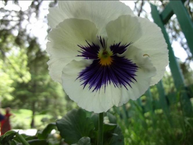 2d Rare white flower
