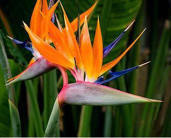 2f rare flower