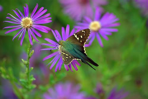 2g rare violet flower