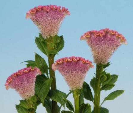 2x Rare tropical flower