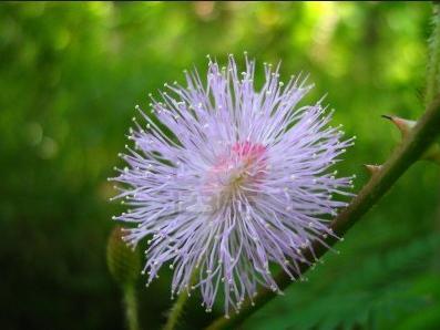 3i Rare white flower