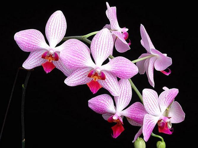 3j Rare Pink flower