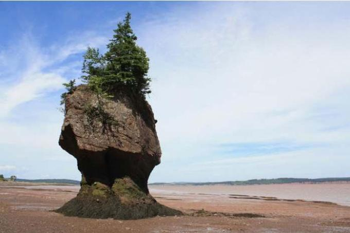 51a Bay of Fundy Canada
