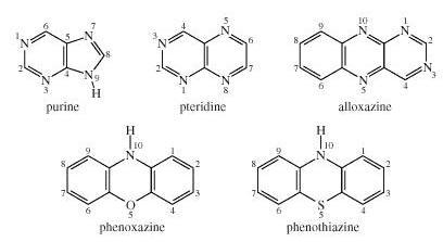 6 Purine pteridine alloxazine phenoxazine phenothiazine