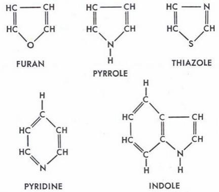 7 Furan Pyrrole Thiazole Pyridine Indole