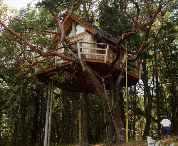 Henry island treehouse