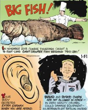 11a Body secretes extra earwax when afraid