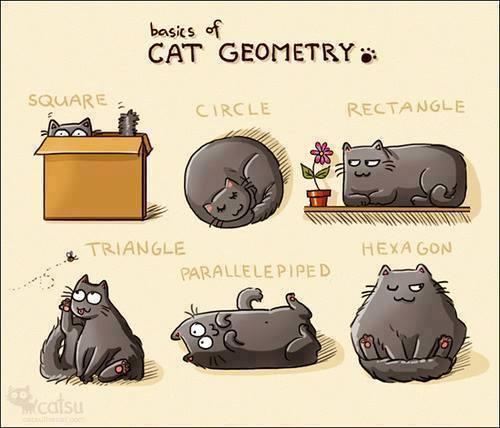 11r cat geometry