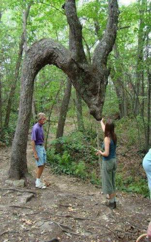 11s kangaroo tree