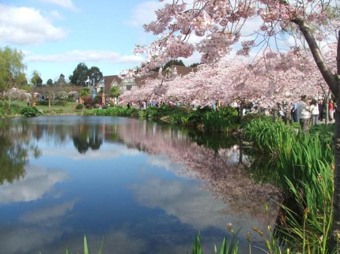 3d sakura festival