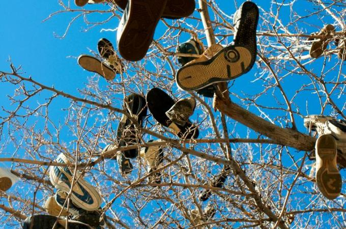9d Shoes hanging from tree