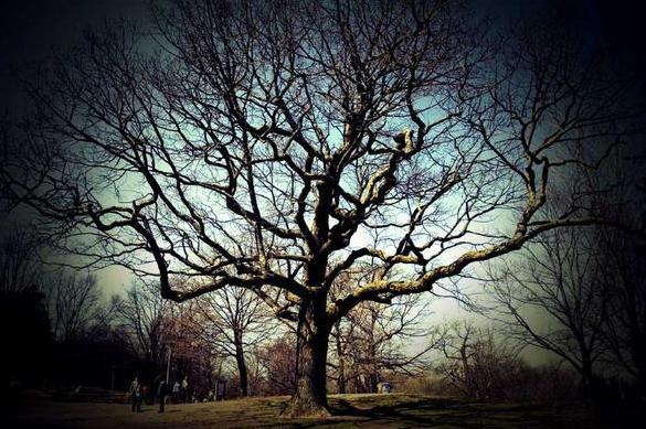 9e Halo of tree