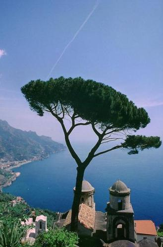 31z A tree in Italy