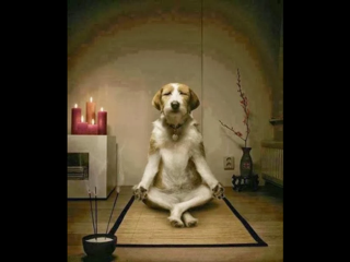 Dog doing dhyan
