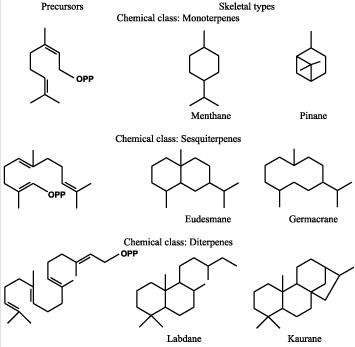 32 Monoterpenes and others