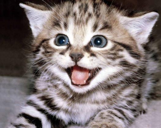 33j Cat laughing