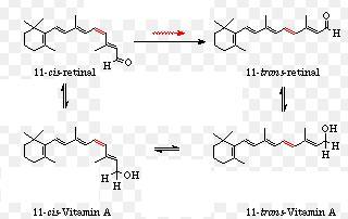 34 Vitamin A shapes