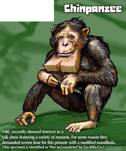 chinpanzee