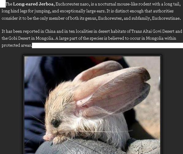 Long eared Jerboa