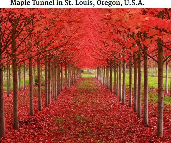 Maple tunnel oregon