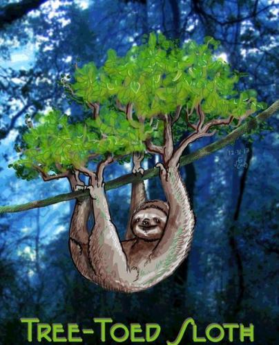 Tree Toed sloth