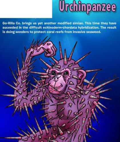 Urchinpanzee
