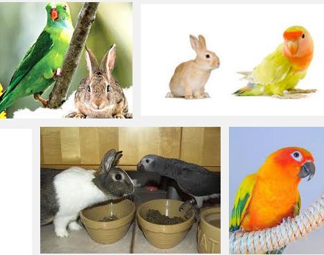 12 Rabbit parrot