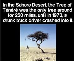 19 only tree