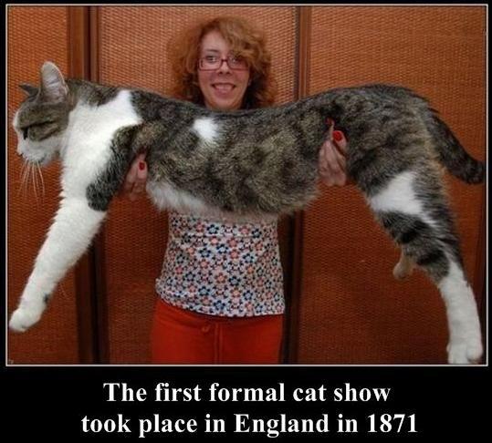 20 cat show