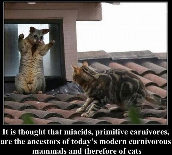 48 modern carnivors