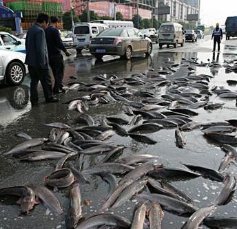 5 fish rain