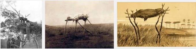 5 Tree Burials Australia