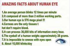 56 Facts about eye